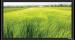 Цены на Экран Vutec ELEGANTE Fixed 198*351 MatteGrey Особенности: Превосходное качество по умеренной цене Рама 4 см в ширину Абсолютно плоское состояние полотна Прочный легкий алюминиевый корпус Черное бархатное покрытие рамы Настенный крепеж в комплекте Полотна:
