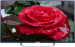 Цены на Shivaki STV - 40LED13 Miracast  -  Нет,   WiDi  -  Нет,   Bluetooth  -  Нет,   Сабвуфер  -  Нет,   3D - очки  -  Нет,   Поддержка DLNA  -  Нет,   NFC  -  Нет,   Встроенный медиа - плеер  -  Есть,   Поддерживаемые форматы файлов  -  MP3,   Управление голосом  -  Нет,   USB - разъем  -  1 шт.,   Количество т