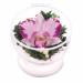 Цены на Цветы в стекле: Композиция из натуральных орхидей Данная композиция состоит из натуральных орхидей,   обезвоженных по специальной технологии,   которая даёт возможность цветам сохранять свой свежий вид на несколько лет,   в среднем 6. В течение этого времени вы