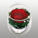 Цены на Цветы в стекле: Композиция из красной розы Размер: высота 7 см,   диаметр 6,  5 см Данная композиция состоит из натуральной розы,   высушенной по специальной технологии,   которая даёт возможность цветку сохранять свой свежий вид на несколько лет,   в среднем 6. В